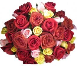 20-Mixed Roses