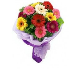 Fresh Mixed Gerbera Flowers
