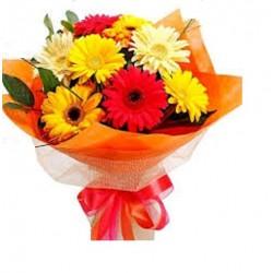 Gerbera Flowers Bokeh